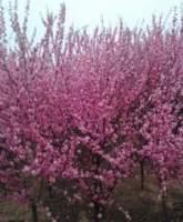 苗木花卉追肥方法和注意事项都有哪些?