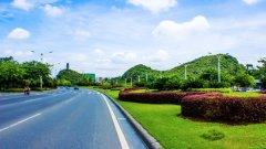 绿化苗木大叶黄杨观赏价值有多高?具体能