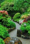 大叶黄杨、冬青苗、金叶女贞球等苗木在