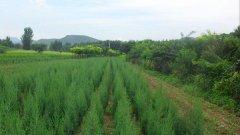 土壤对绿化苗木的种植有多重要?当前哪些
