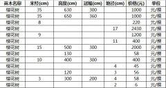 2020年山东樱花树的最新价格表_图片_樱花