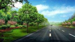 园林景观树木都有哪些?绿化苗木景观园艺