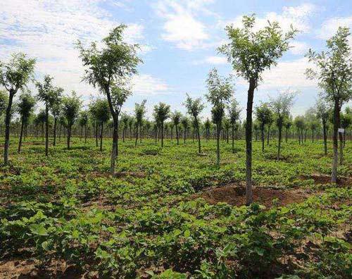 苗木种类有哪些?常见的绿化苗木有什么?