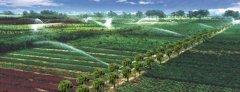 绿化苗木缺铁性失绿症的症状和防治方法