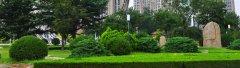 常见绿化苗木的花语或寓意有什么?